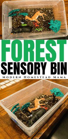 Forest Sensory Bin Activity for Preschoolers | Modern Homestead Mama